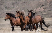 Herd of horses on a background of mountains — Stock Photo