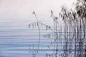 Reeds on the lake — Stock Photo