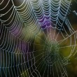 Dew drops on a spider web — Stock Photo #41035301