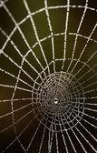 Gocce di rugiada su una tela di ragno — Foto Stock