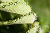 Brilliant drops of dew or rain on the grass — Stock Photo