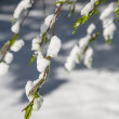 Tree branch in the foreground against the white snow. — Stock Photo #46063821