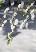 Tree branch in the foreground against the white snow. — Stock Photo