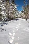 Footprints in the snow in the forest. — Foto Stock