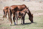 Horse, mare with a foal. — Foto de Stock