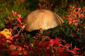 Mushrooms grow in the forest — Stock fotografie