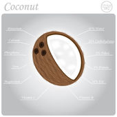 Coconut composition — Stock Vector