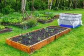Backyard gardening — Stock Photo