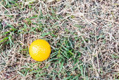 Yellow Miniature Golf Ball in the rough — Stock Photo