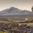 Lanzarote, arid volcanic landscape with a lonely palm tree — Stock Photo