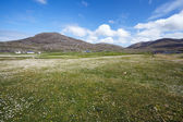 Flowery meadow. Isle of Barra, Outer Hebrides, Scotland. — Foto de Stock