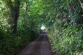 Vicolo paese verde — Foto Stock