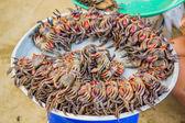 Sklep solonego krabów — Zdjęcie stockowe