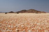 Desert in Namibia — ストック写真