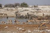 Wildlife at the waterhole — Stock Photo