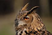 Eagle Owl (Bubo bubo) — Stock Photo