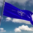 NATO Flag, animated on different backgrounds — Stock Video
