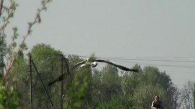 Grus kuşlar sabah erken saatlerde yemek için arıyor — Stok video