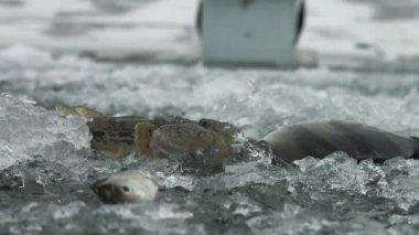 鱼栖息在河冬天在冰面上 — 图库视频影像