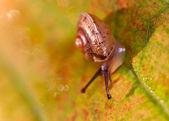 Mały ślimak — Zdjęcie stockowe