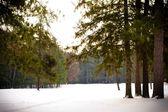 Zimą drzewa krajobraz — Zdjęcie stockowe