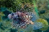Fishe — Stock fotografie