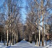 Winter in city park — Stock Photo