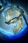 Jellyfish Murano Glass Sculpture in Venice — Stock fotografie