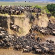 Постер, плакат: Gnu Crossing a River Safari Kenya