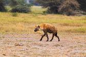 Hiena - safari Kenia — Foto de Stock