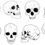 Skulls set — Stock Vector #38631535