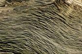 Oude gebarsten houtstructuur — Stockfoto