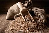 Sacks of grain on old boards — Stock Photo