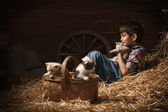 Boy playing with kittens in the barn — Stock Photo