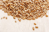 Ear and grain of the wheat — Stock Photo