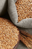 Wheat and the scattered bag with a grain — Stock Photo