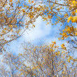 Trees against sky — Stock Photo #43969251