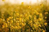 Field grass — Stock Photo