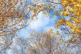 Trees against sky — Stock Photo