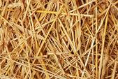 Straw of wheat — Stock Photo