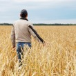 The person examines a crop wheat in a field — Stock Photo #43972133