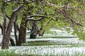 Snow on grass — Stock Photo