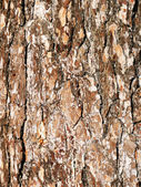 Bark of a tree — Stock Photo