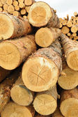 Forest product — Stock Photo