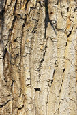 Bark of tree — Stock Photo