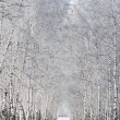 Birch alley in winter — Stock Photo #43981881