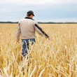 The person examines a crop wheat in a field — Stock Photo