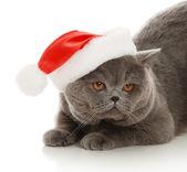 Gatto nel cappello — Foto Stock
