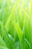 Mladé zelené trávě — Stock fotografie