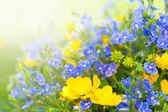 野花的花束 — 图库照片